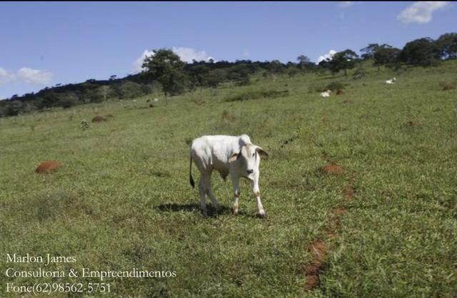 Fazenda em Cocalzinho-G! - Foto 2
