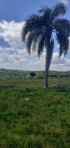 Chacara de 2 hectares á 7 km da br 293 - Foto 4