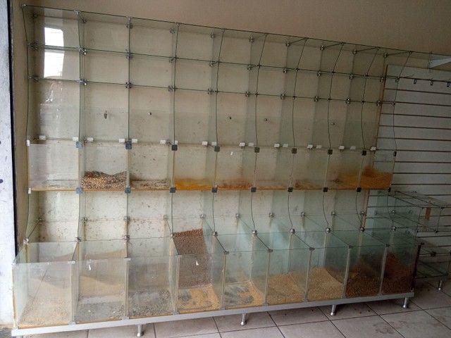 Expositor e vitrine de vidro