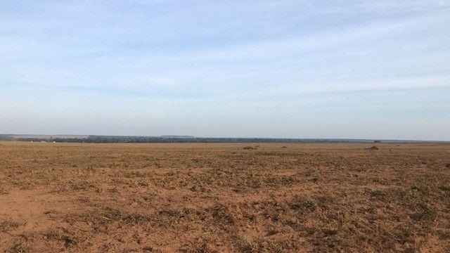Fazenda Oportunidade de investimento  - Foto 8