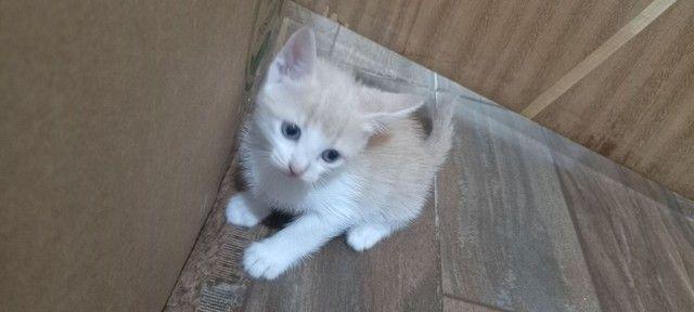 Doação para esses gatinhos  - Foto 3