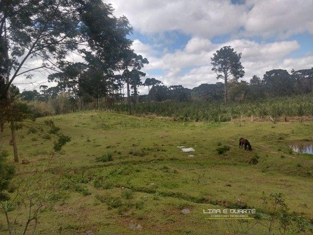 Chácara para Venda em Quitandinha Rio Negrinho-SC - Foto 12