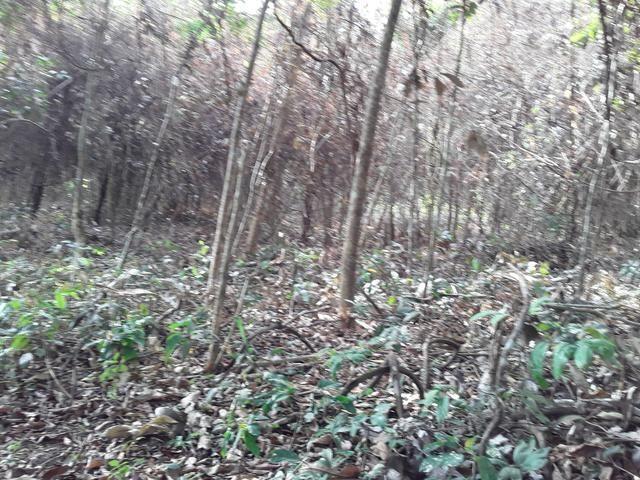 Vendo uma cachará verdi toda bosquêada - Foto 5