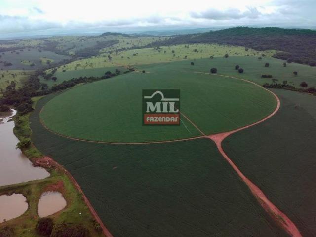 Área irrigada ( pivo central ) Fazenda 68 alqueires ( 333 hectares ) Morrinhos-GO - Foto 2