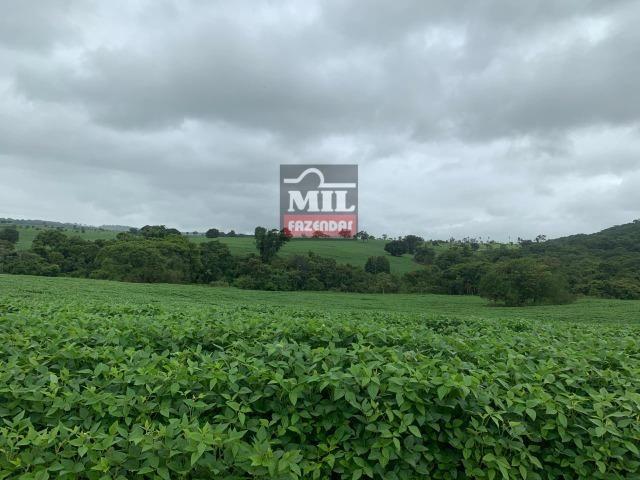 Área irrigada ( pivo central ) Fazenda 68 alqueires ( 333 hectares ) Morrinhos-GO - Foto 11