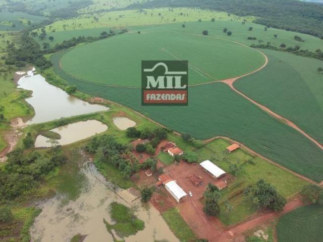 Área irrigada ( pivo central ) Fazenda 68 alqueires ( 333 hectares ) Morrinhos-GO