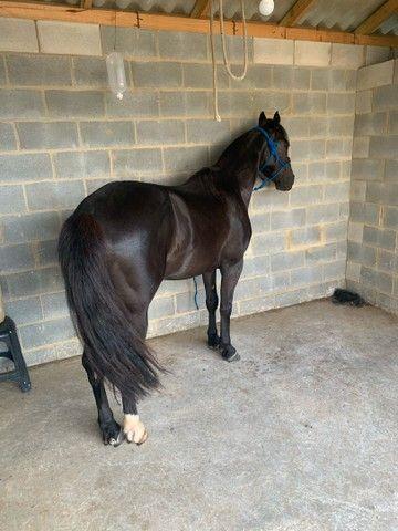Vende - se cavalo  - Foto 2