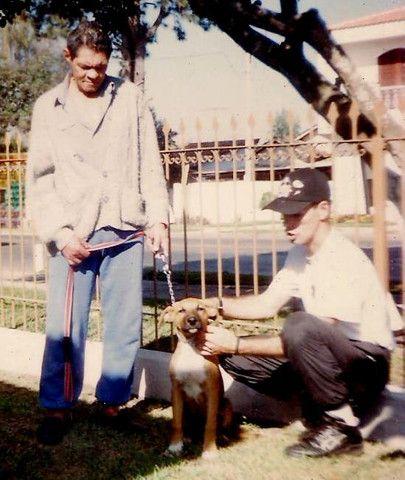 Adestramento de Cães - Foto 3