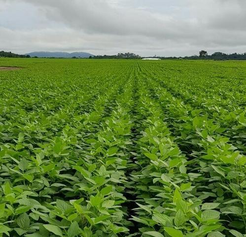 Fazenda com 5500 hectares em Mucajaí/RR. ler descrição do anuncio