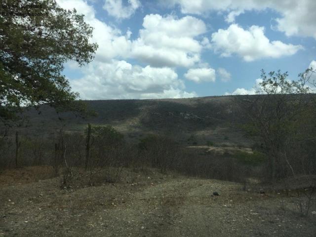Fazenda em gravata 502 hectares, terreno amplo sen um vale com passagem de rio 8km da br23 - Foto 5