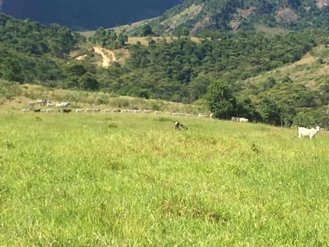 Fazenda - Centro Guaratinga - Foto 3