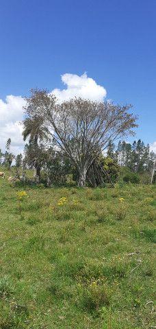 Chacara de 2 hectares á 7 km da br 293 - Foto 3