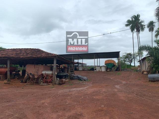Área irrigada ( pivo central ) Fazenda 68 alqueires ( 333 hectares ) Morrinhos-GO - Foto 5