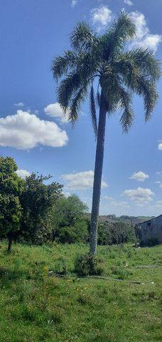 Chacara de 2 hectares á 7 km da br 293 - Foto 7