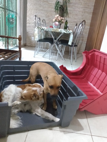 Casinha de cachorro grande - Foto 6