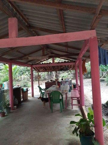 Vendo um sítio em Boa Vista. Curuça.55.000 - Foto 6