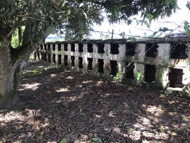 Granja, sítio, fazenda em Igarassu, 4 hectares com bastante benfeitorias! - Foto 12