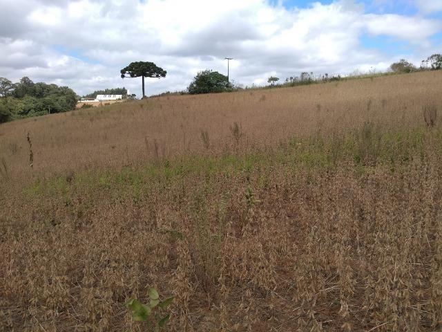 REF 2407 - Chácara com 3.000m² - Excelente formar chácara Serrinha - Contenda/PR - Foto 9