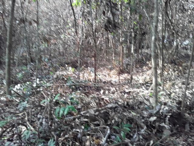 Vendo uma cachará verdi toda bosquêada - Foto 7