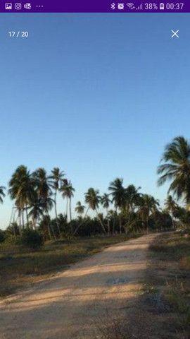 Área med. 100 ta = 435.600 m2 no Povoado Coqueiros - Foto 9