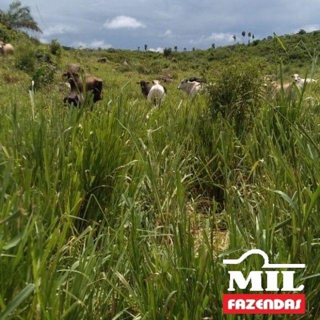 Fazenda de 320 alqueires (1550 hectares) em Vila Rica - MT - Foto 2