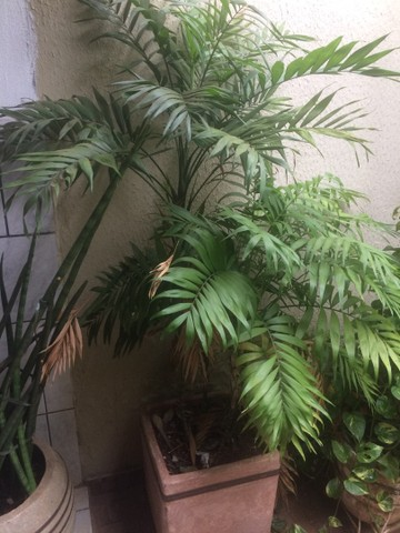 Plantas lindas  - Foto 4