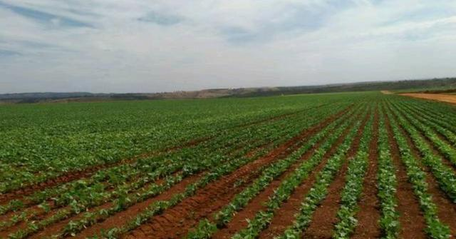 Fazenda próximo a Patrocinio Mg - Foto 3