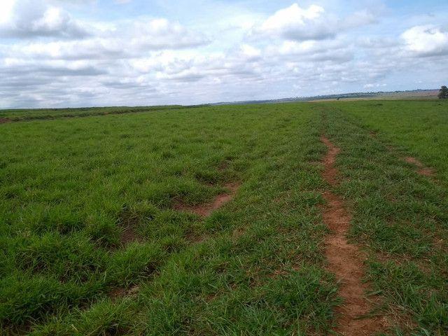 Arrendamento Fazendas PR Ms e Mt - Foto 15