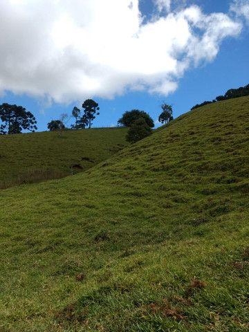 Maravilhoso Sítio de 9.9 Alqueires na Serra Mantiqueira Município Piranguçu-Mg - Foto 7