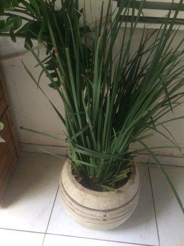 Plantas lindas  - Foto 2