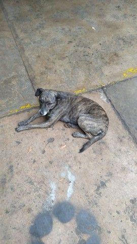 Cachorros  para doação  - Foto 2