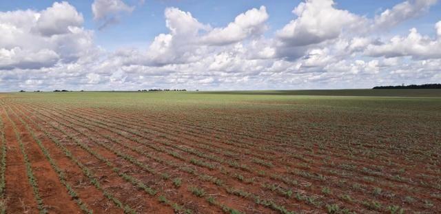 Fazenda 1.700 Hectares Plantando Lavoura - Tapurah - MT - Foto 2