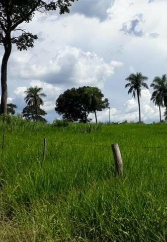 Oportunidade Fazenda Vale Do Prata - Foto 4
