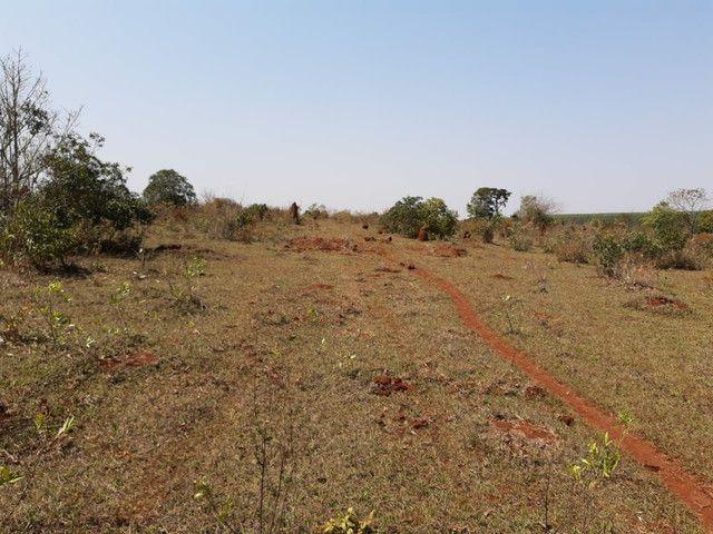 Arrendamento Fazendas PR Ms e Mt - Foto 6