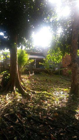 Chácara perto do café contri, estrada Mutum Km 1, próximo da marcenaria e marmoraria - Foto 8