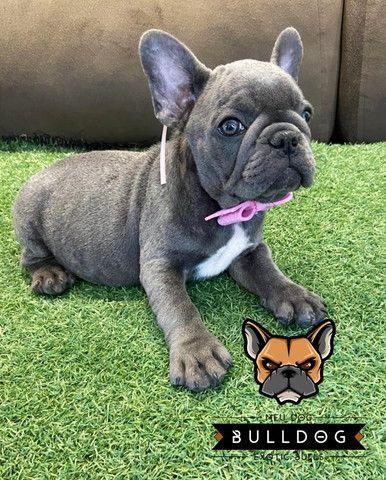 Bulldog frances femea - Foto 2
