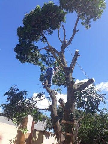 Corte e remoção de árvore