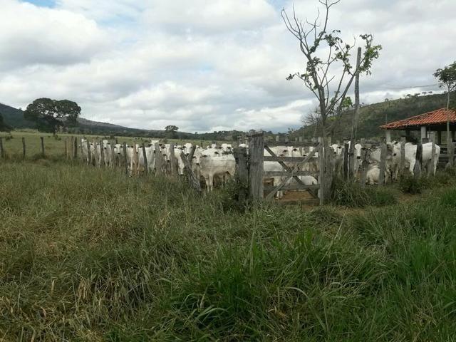 Fazenda ximarao em ALMENARA mg 125 hectares - Foto 6