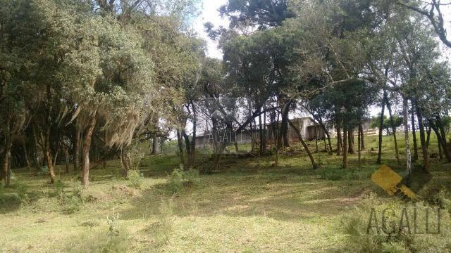 Chácara à venda em Zona rural, Contenda cod:219-16 - Foto 10