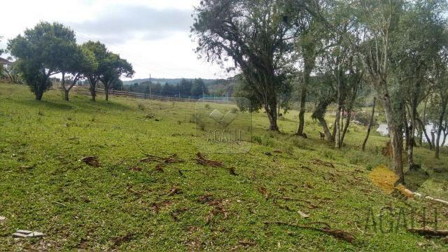 Chácara à venda em Zona rural, Contenda cod:219-16 - Foto 4