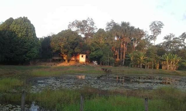 Chácara chacara, sitio, fazenda casa moradia carro, aluguel, aluga-se - Foto 4