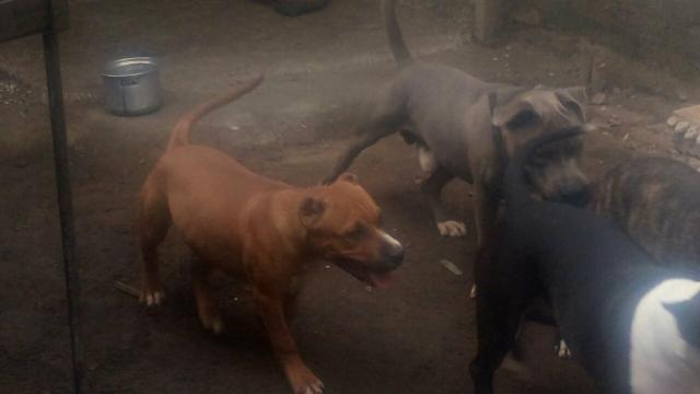 Vendo cachorro - Foto 2