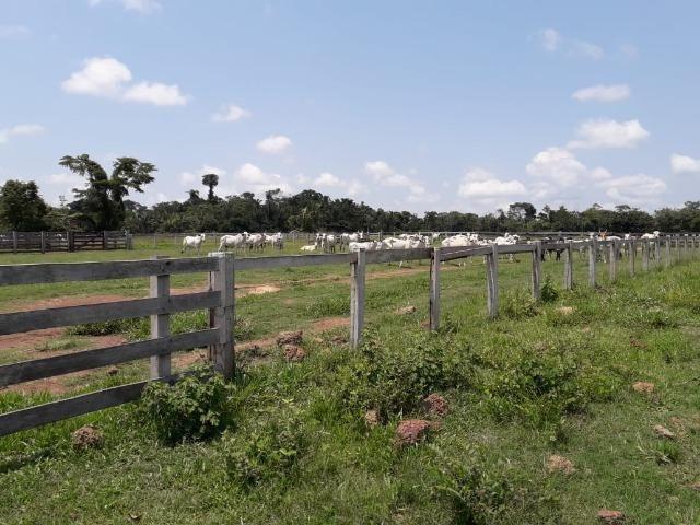 Fazenda 1.232 Hectares Terra de Cultura - MT - Foto 4