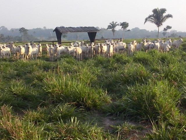 Fazenda 1.232 Hectares Terra de Cultura - MT - Foto 12