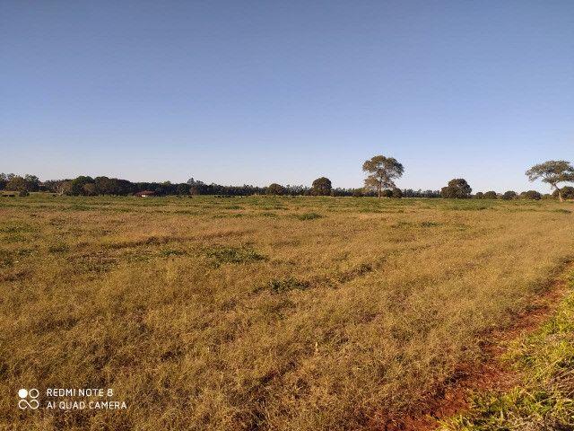 Área de 30 hectares saída São Paulo Próximo da BR 163 - Foto 4
