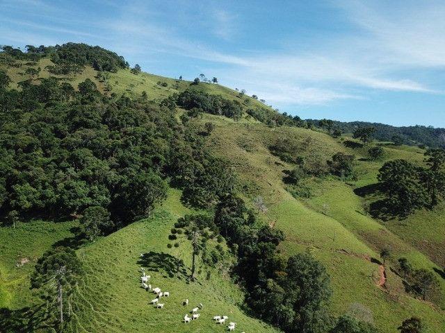 Maravilhoso Sítio de 9.9 Alqueires na Serra Mantiqueira Município Piranguçu-Mg - Foto 16