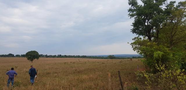 Fazenda 219 alqueires | região Caçu | boa pra lavoura plana - Foto 5