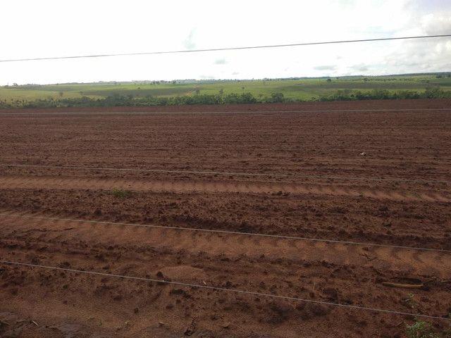 Arrendamento Fazendas PR Ms e Mt - Foto 9