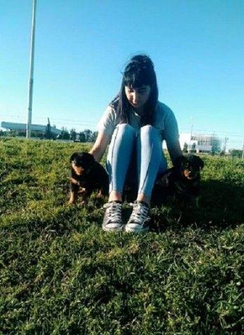 Rottweiler Filhotes, Cabeça de Touro!! Pais adestrados para guarda, Busque o seu hoje - Foto 6