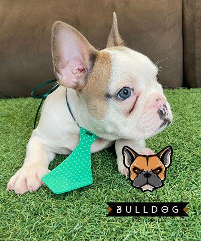 Bulldog frances - Foto 6